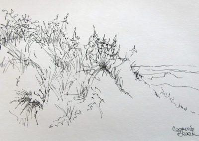 Cooper's Beach Left, 5.5 x 8.5, pen and ink